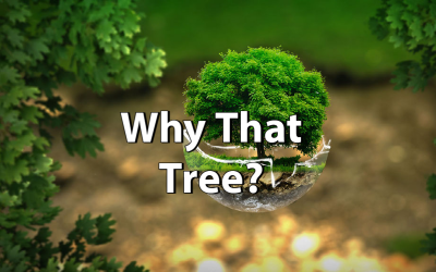 Why That Tree?